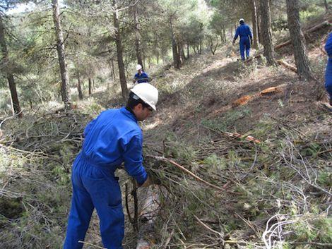 mejoras forestales beninar sierra de gador
