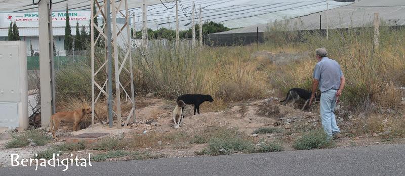 protectora animales berja perros abandonados